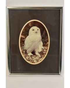 Silver Tone Metal Picture Frame With Owl Picture Measures 9.25 x 7.25 Inches
